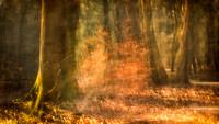 Autumn apparition