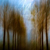 Mist meets golden light