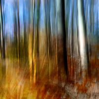 Burnt birches