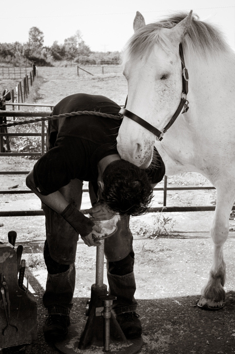horse shoeing