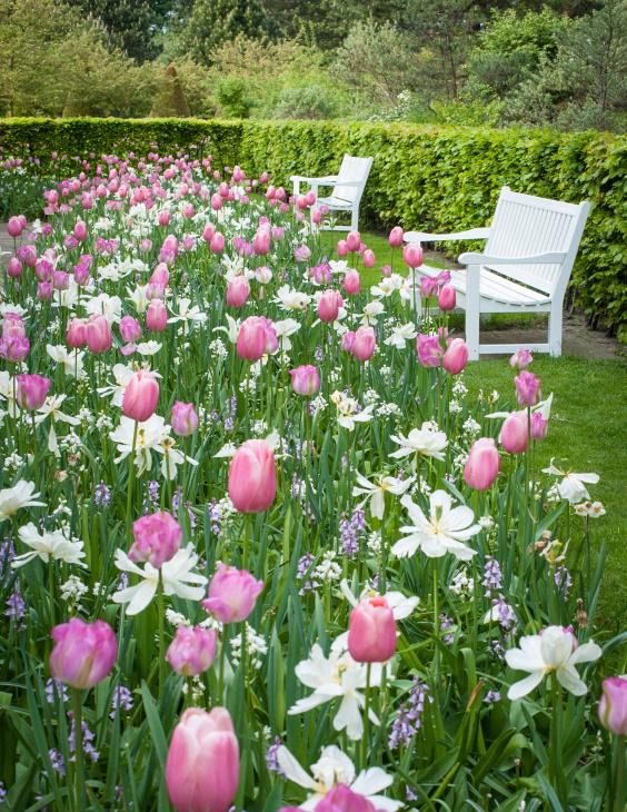 Keukenhof tulips Copyright Charlotte Bellamy Photography