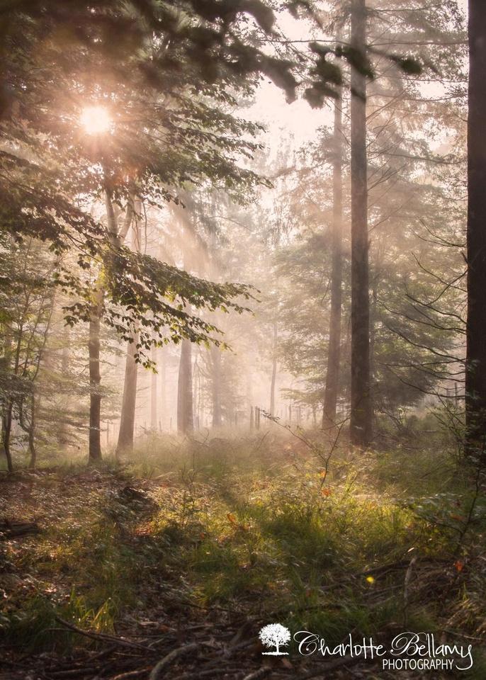 posbank woodland copyright Charlotte Bellamy Photography