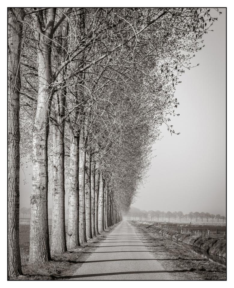 Straight tree lines