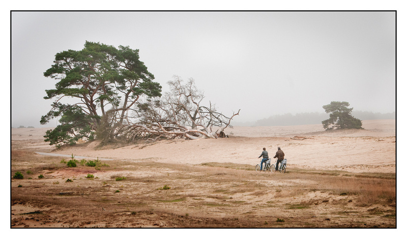 White bikes in the Veluwe
